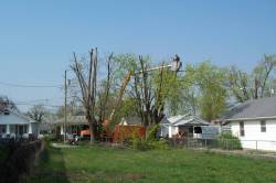 Fully equipped tree service in Lexington, Nicholasville and Versailles
