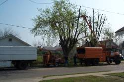 Liscensed and insured tree service in Lexington, Nicholasville and Versailles