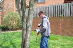 Offering a variety of tree services in Lexington, Nicholasville and Versailles