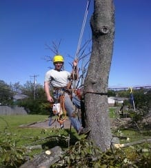 tree cutting- Tree Service in Lexington, Nicholasville and Versailles Ky.
