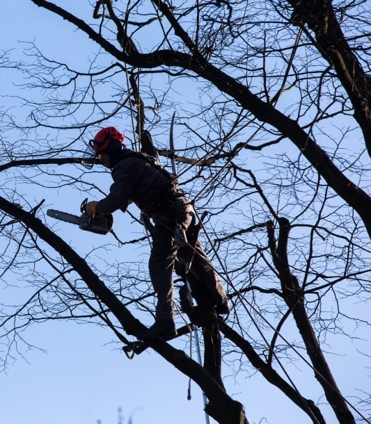 Tree cutting- Tree Service in Lexington, Nicholasville and Versailles Ky