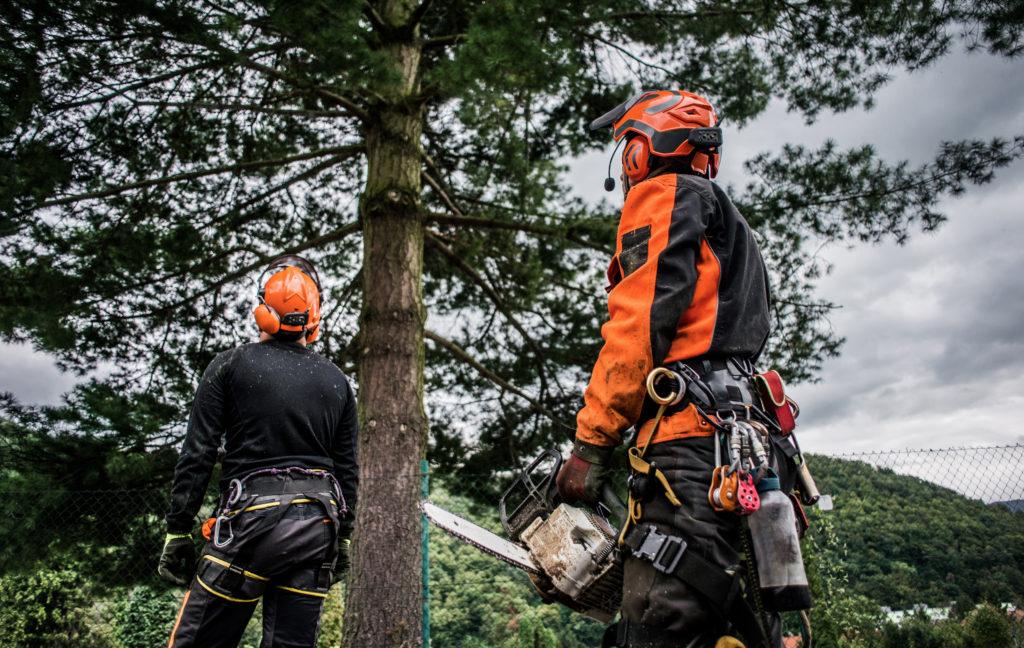 Tree Service Nicholasville KY